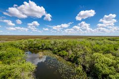 Cloudy day at Everglades National Park. The marshes, swamps, and wetlands of the Everglades are home to some of the most interesting wildlife and vegetation royalty free stock photos