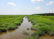 Marshes at Wildlife Refuge Royalty Free Stock Image