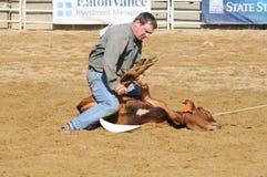 Marshfield,马萨诸塞- 2012年6月24日:试图圈地的牛仔阻塞小牛的三条腿 免版税图库摄影