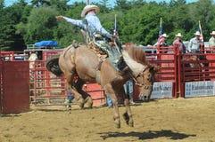 Marshfield, Massachusetts - 24 de junio de 2012: Un vaquero del rodeo que monta un caballo salvaje bucking Foto de archivo libre de regalías