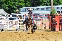 Marshfield Massachusetts - Juni 24, 2012: En rodeocowboy Attempting To Rope en rinnande kalv Fotografering för Bildbyråer
