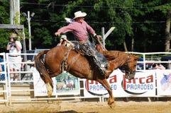 Marshfield Massachusetts - Juni 24, 2012: En rodeocowboy som rider en sparka bakut vildhäst Fotografering för Bildbyråer