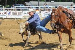 Marshfield Massachusetts - Juni 24, 2012: En rodeocowboyDiving From His häst som fångar ett råd Fotografering för Bildbyråer