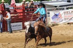 Marshfield Massachusetts - Juni 24, 2012: En stående tonårs- flicka som rider två rinnande ponnyer Arkivfoton