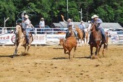Marshfield Massachusetts - Juni 24, 2012: Två rodeocowboyer som försöker att rope ett rinnande råd Royaltyfri Foto