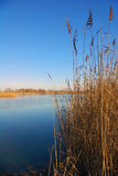 Marshland. In North of Italy at the end of the winter stock photo