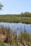 marshland Foto de Stock Royalty Free