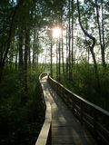 marshland Imagens de Stock
