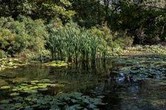 marshland Στοκ Εικόνες