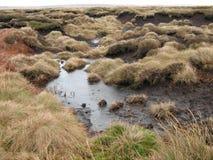 marshland Fotografía de archivo