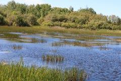 marshland Στοκ εικόνες με δικαίωμα ελεύθερης χρήσης