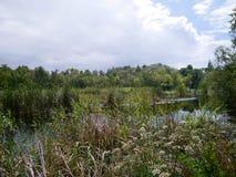 Marshland area. Proliferation of vegetation and water Royalty Free Stock Photos