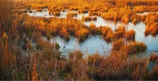 Marshland. At the winter sunset royalty free stock photo