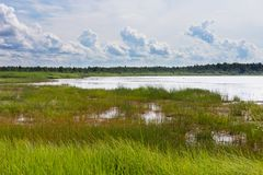 Marshland by the sea landscape Stock Images