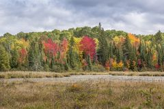 Marshland with colors of indian summer in Renfrew County royalty free stock image