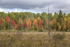 Marshland with colors of indian summer in Renfrew County stock images