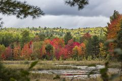 Marshland with colors of indian summer in Renfrew County stock photography