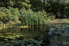Marshland. Covered with lilies and reeds, round the thickets of shrubs and trees stock photo