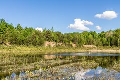 Marshland with dry grass, young trees. Time for sunset stock images