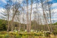 Marshland. A Marshland within a forest stock photo