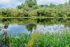 Marshland. Gray clouds over the marshland and bushes royalty free stock photography