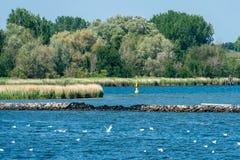 Marshland in Hohe Duene at the Baltic sea coast stock photography