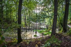 Marshland. A Marshland within a forest stock images