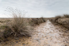 Marshland near kynance cove in cornwall england uk Royalty Free Stock Photography
