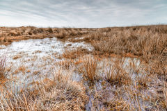 Marshland near kynance cove in cornwall england uk Royalty Free Stock Photo