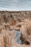 Marshland near kynance cove in cornwall england uk Stock Photo