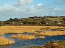 Marshland Near Marazion Cornwall. Reeds and wetlands just outside the village of Marazion on the southwest Cornish coast Royalty Free Stock Photos