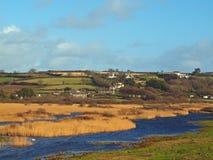 Marshland Near Marazion Cornwall. Reeds and wetlands just outside the village of Marazion on the southwest Cornish coast Stock Images