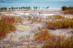 Marshland near salt lake. Puddles with dirty weedy water on the lakeshore, waterlogged area stock photo