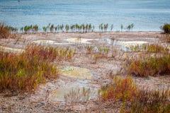 Marshland near salt lake Royalty Free Stock Photo