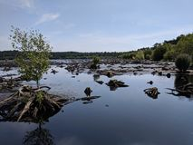 Marshland. Once Forrest stock images