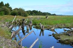 Marshland stock photography
