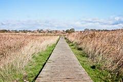 Marshland path Stock Images
