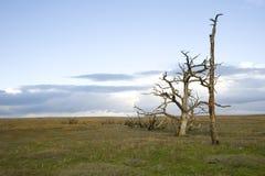 Marshland at Porlock Bay Royalty Free Stock Image