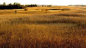 Marshland Presqu'ile Provincial Park, Ontario Stock Images