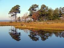 Marshland Reflection. Photo of marshland during early morning in Maryland stock photo