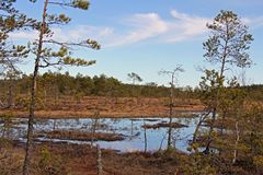 Marshland Scenery at Spring in Finland Royalty Free Stock Images