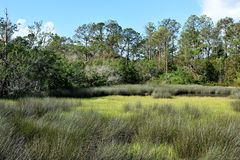 Marshland in St Augustine Stock Images