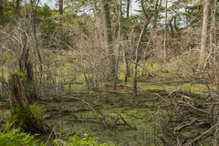 Marshland Swamp after a Storm Stock Photo