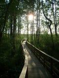 Marshland. To cross the polish marshland stock images