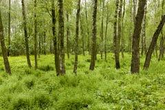 The marshland Stock Images