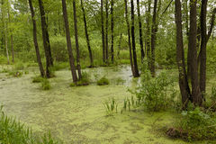 The marshland Stock Photos