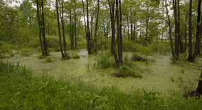 The marshland Stock Image
