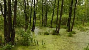 The marshland Royalty Free Stock Image