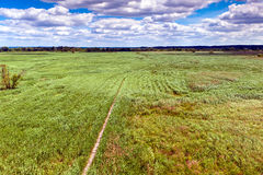 Marshland. A view of a marshland in the summer stock photo