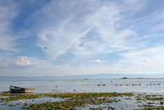 Marshland and white pelicans. Blue sky over Lake Chapala, Mexico with pelicans on water and old fishing boat stock images